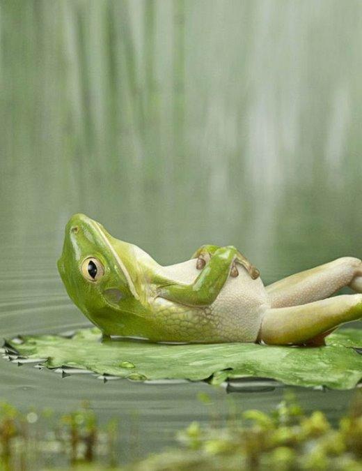 santosha-frog