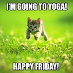 Friday Cat Yoga