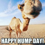 happy-hump-day